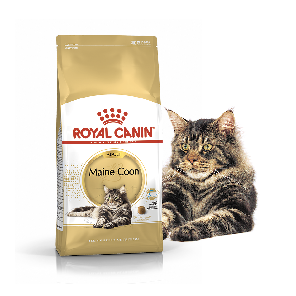 Royal Canin (Роял Канин) Maine Coon 31 для котов породы Мэйн Кун
